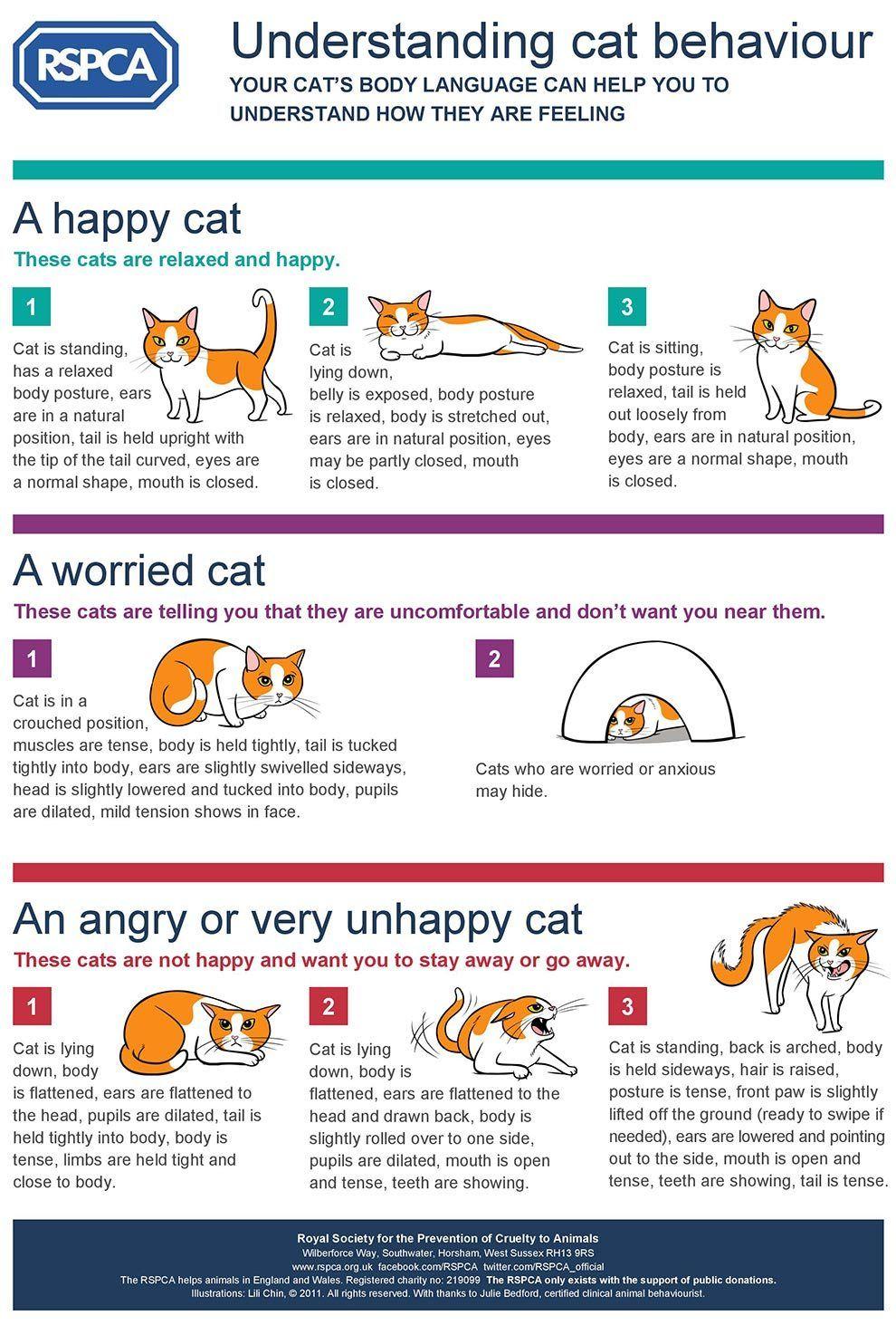 An Infographic To Help You Understand Cat Behavior Cat Behavior Cat Body Cat Language