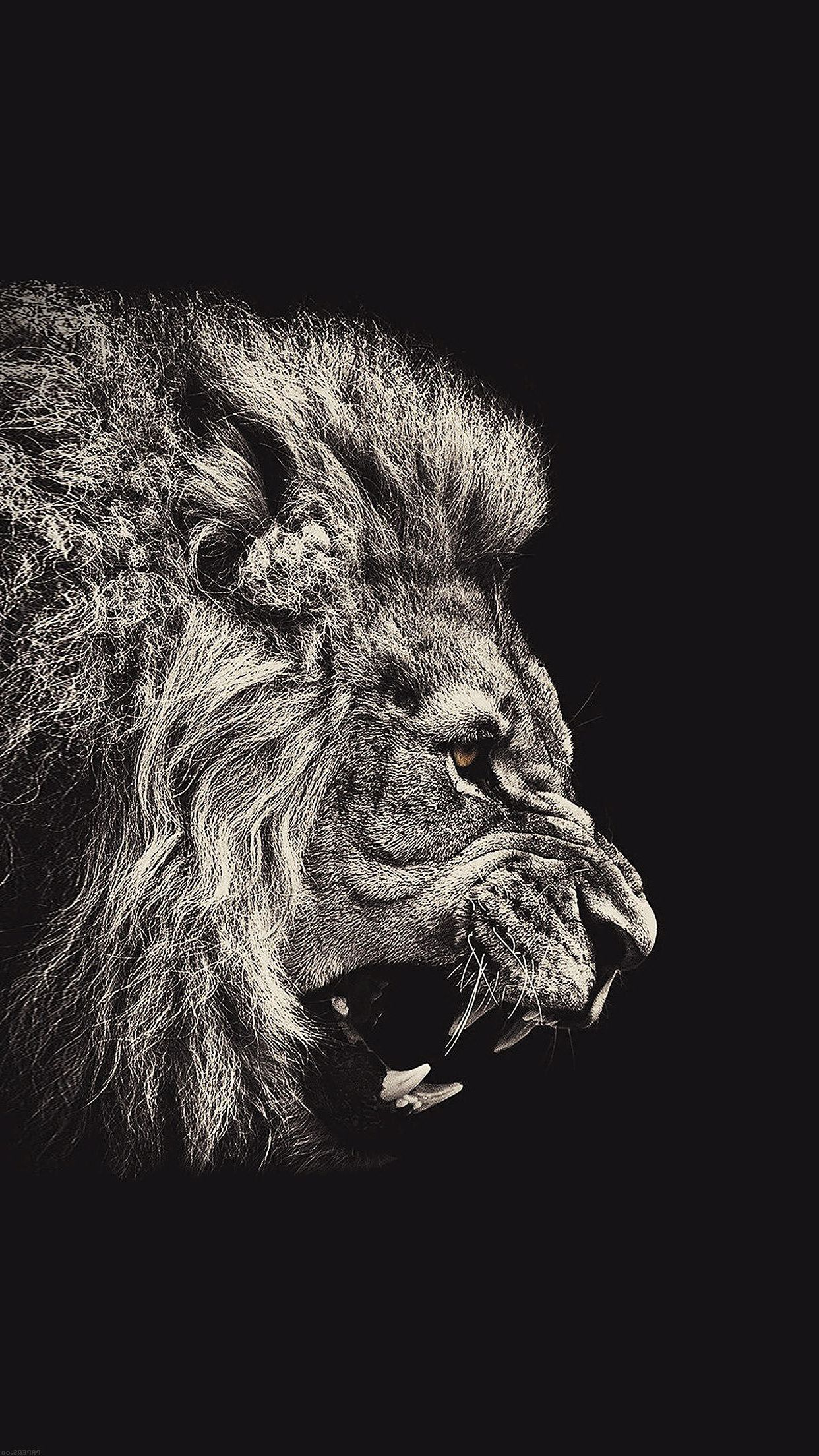 Lion Wallpaper Iphone 7 Iphonewallpapers Lion Wallpaper Lion