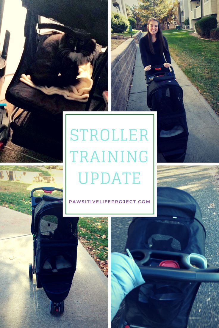 Stroller Training Part 2 Our First Outdoor Excursion