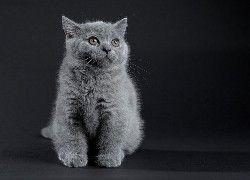 Tapety Slodkie Zwierzeta Tapety Tapeta Zdjecia Tapety Na Pulpit Animals Cats