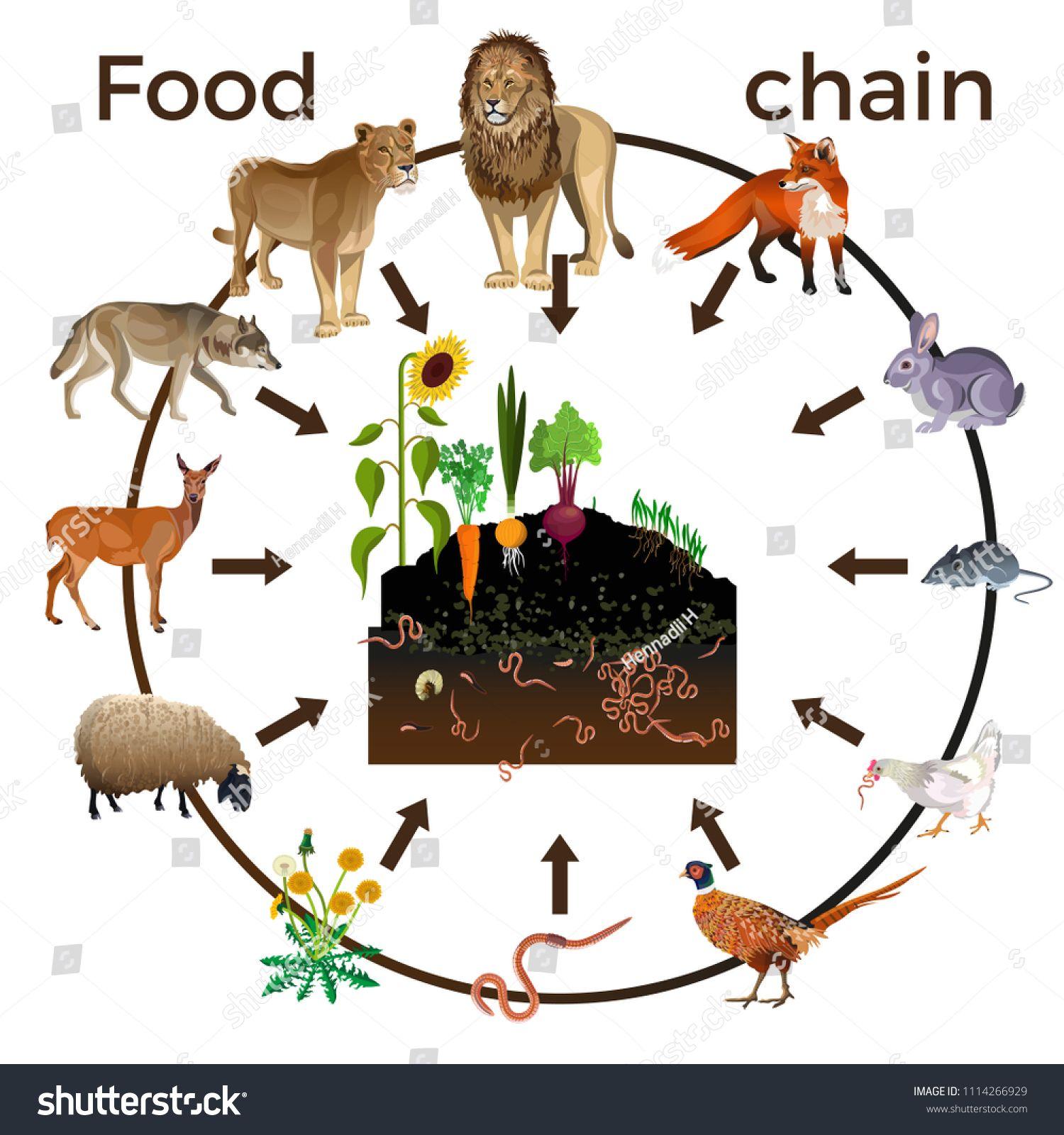Food Chain Animals Vector Illustration Isolated On White Backgroundanimals Vector Food Chain Food Chain Farm Party Foods Food Animals [ 1600 x 1500 Pixel ]