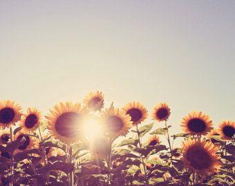 Sunflower Vintage Photography