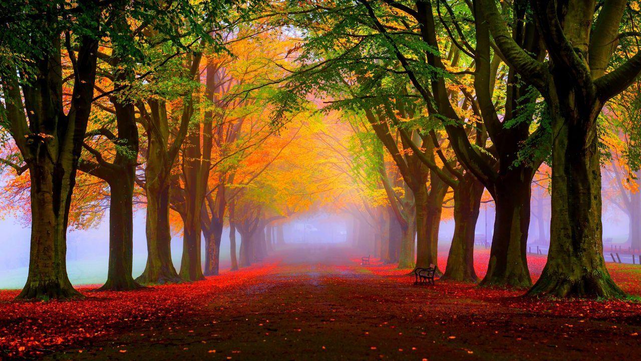 Iphone 6 Wallpaper Fall Leaves Park 5k 4k Wallpaper 8k Autumn Beautiful Leaves