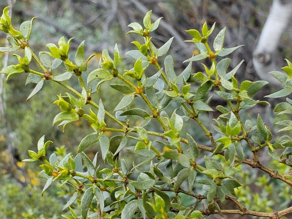 Wildharvested in Arizona | Herbal remedies, Herbalism ...