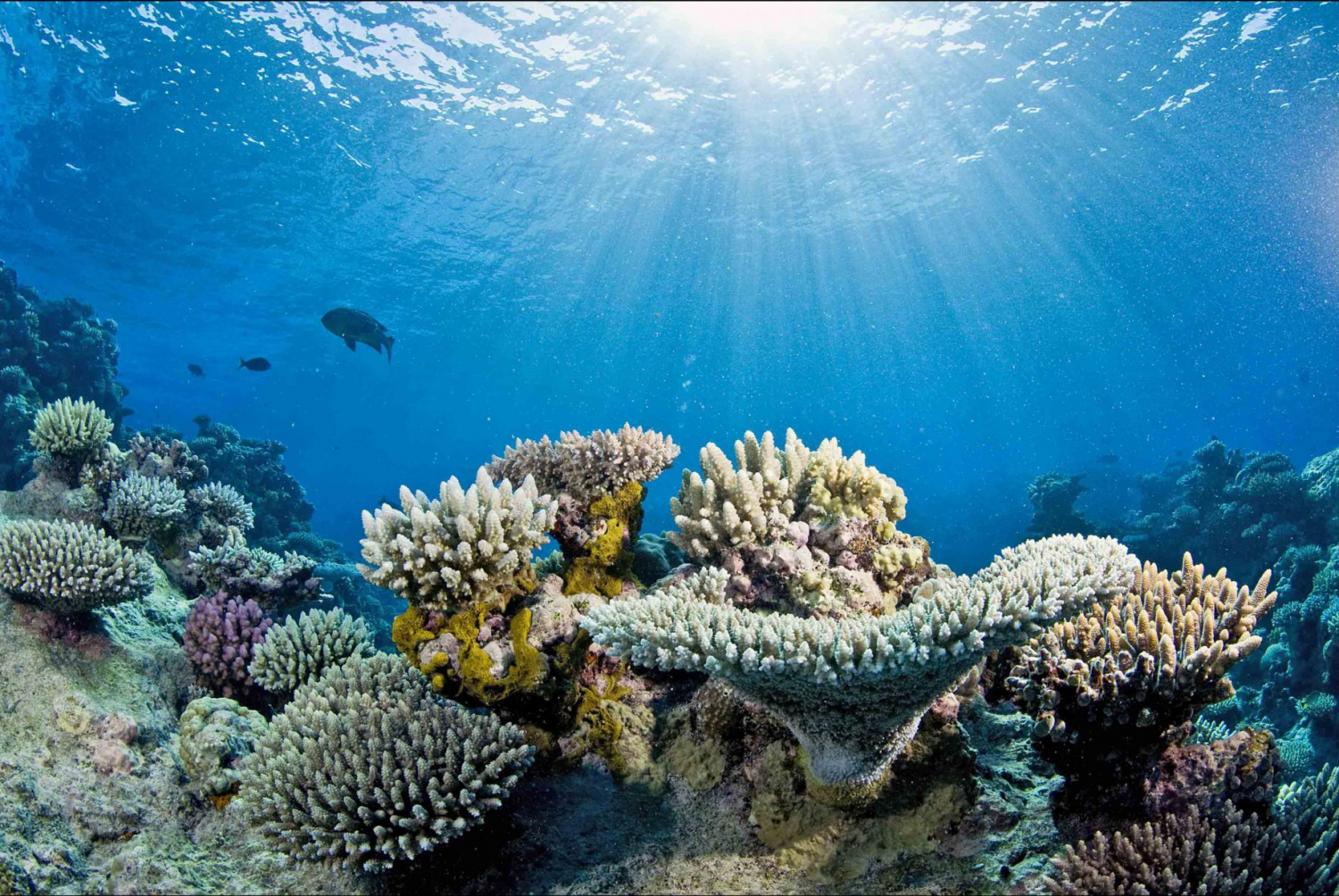 The Coverage Of Living Corals On Australia S Great Barrier Reef Could Decline To Less Than 10 Percent If Oce Coral Reef Pictures Coral Reef Ocean Acidification