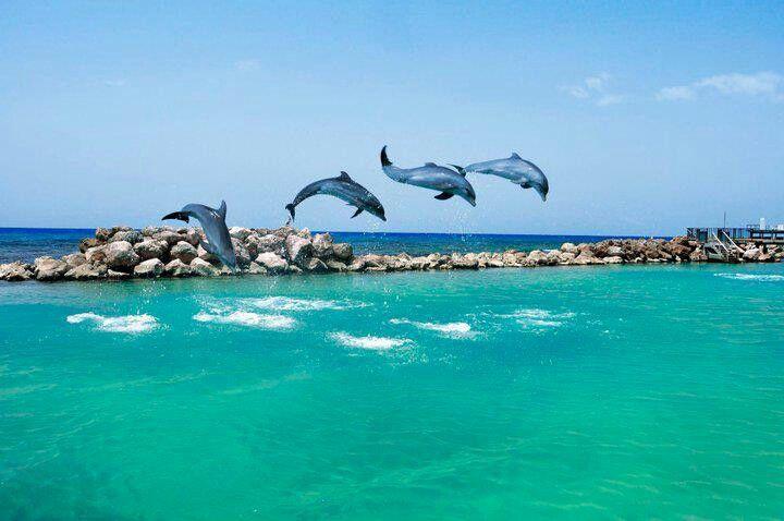 Dolphin Cove Jamaica Jamaica Vacation Jamaica All