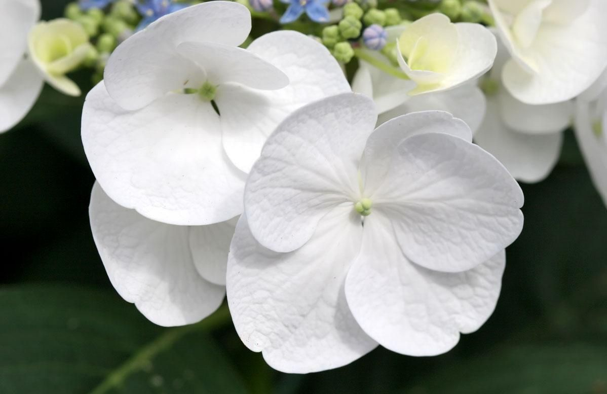 White Flowers Pics Yahoo Search Results