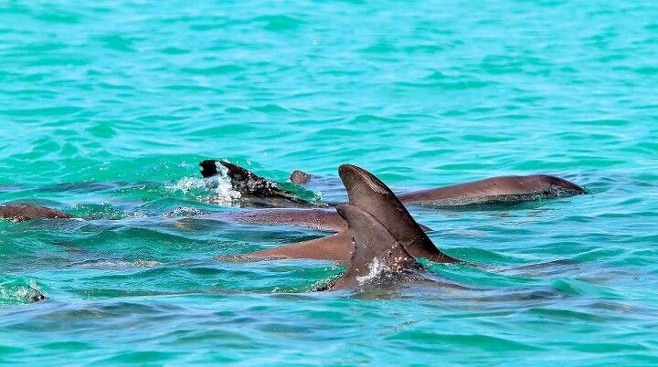 Dolphins In Islamorada Florida Keys Val That Remains The Best Birthday Gift Ever Swimming With Dolphins So Cool Islamorada Florida Keys Florida