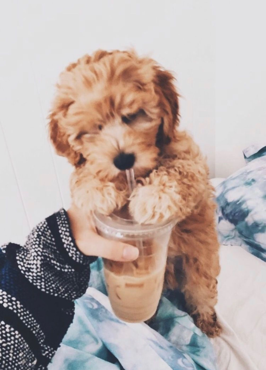 Vsco Trendy Vsco Cute Dogs And Puppies Animal Tumblr Cute