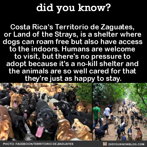 Costa Rica S Territorio De Zaguates Or Land Of The Strays Is A Shelter Where Dogs Can Roam Free But Also Have Access To Animal Facts Wtf Fun Facts Fun Facts
