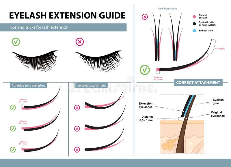 Eyelash Extension Guide. Tips And Tricks For Lash Extension. Infographic Vector Illustration. Correct And Incorrect Attachment Stock Vector - Illustration of flat, care: 108803049