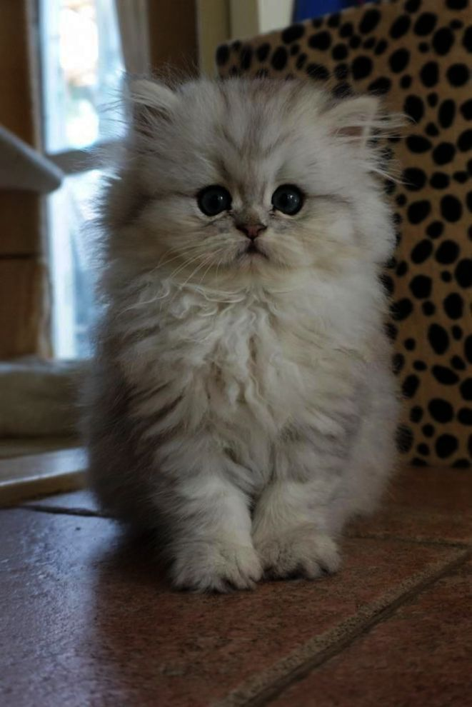 Is It Friday Yet Kitten Pictures Cute Baby Animals Kittens