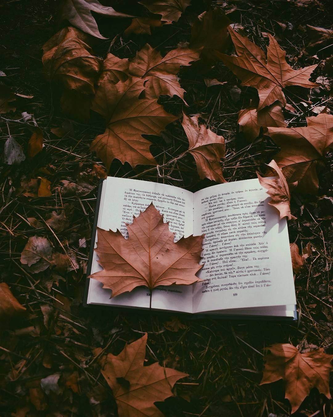 Fall Aesthetic Pictures Tumblr