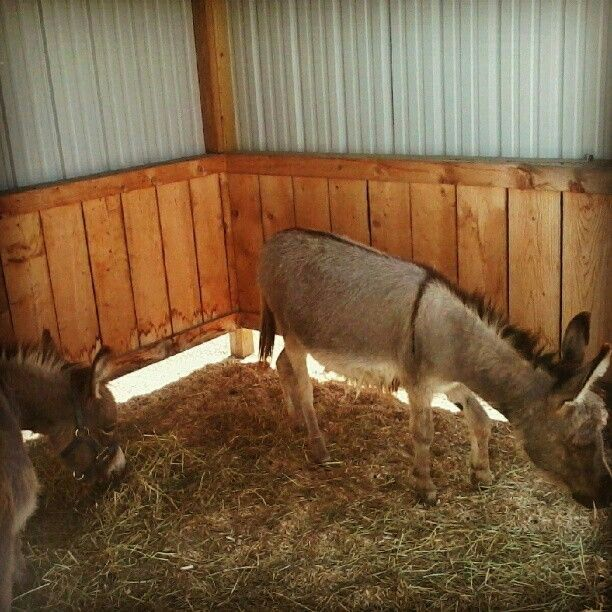 Donkeyy!!