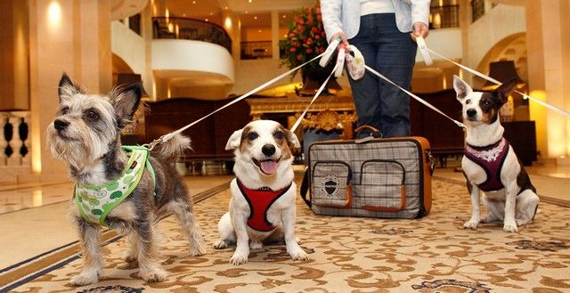 Best Pet Friendly Hotels