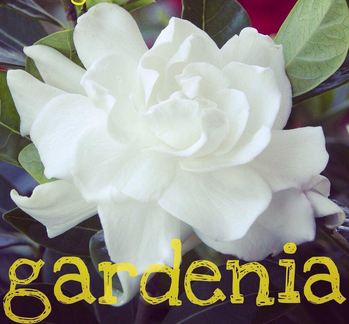 A personal favorite from my Etsy shop https://www.etsy.com/listing/240394908/gardenia-body-scrub
