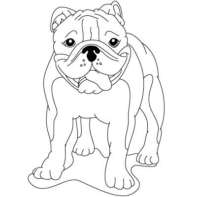 How To Draw Easy Bulldog Drawings Bulldog Drawing Easy Drawings