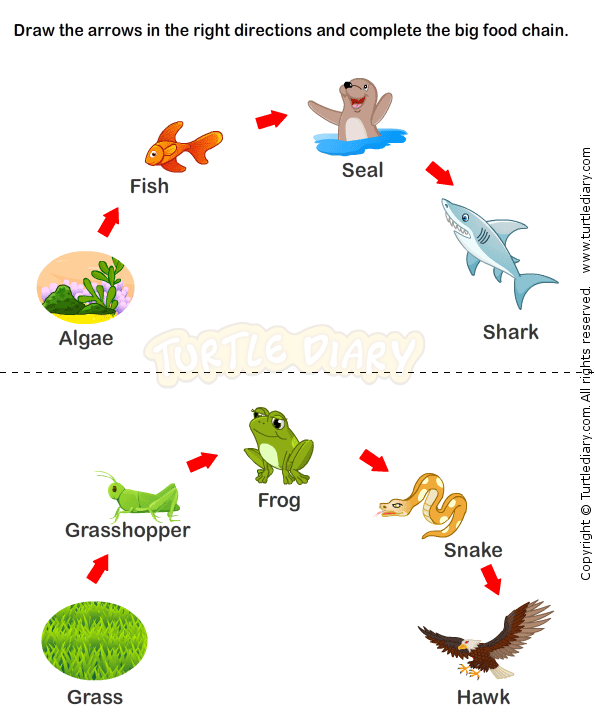 Week 2 & 3 Consumers and Food Chain: Food Chain Worksheets | Science ...