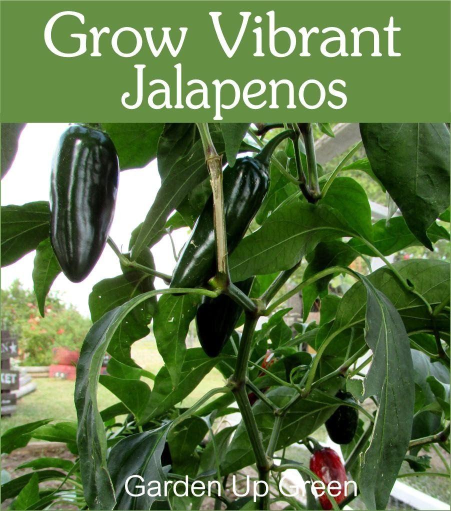 Garden up green easy vegetables to grow growing