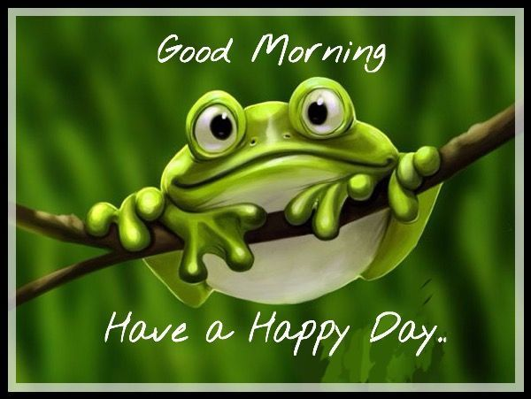 Good Morning And Have A Happy Day Cute Frogs Funny Frogs Frog Pictures