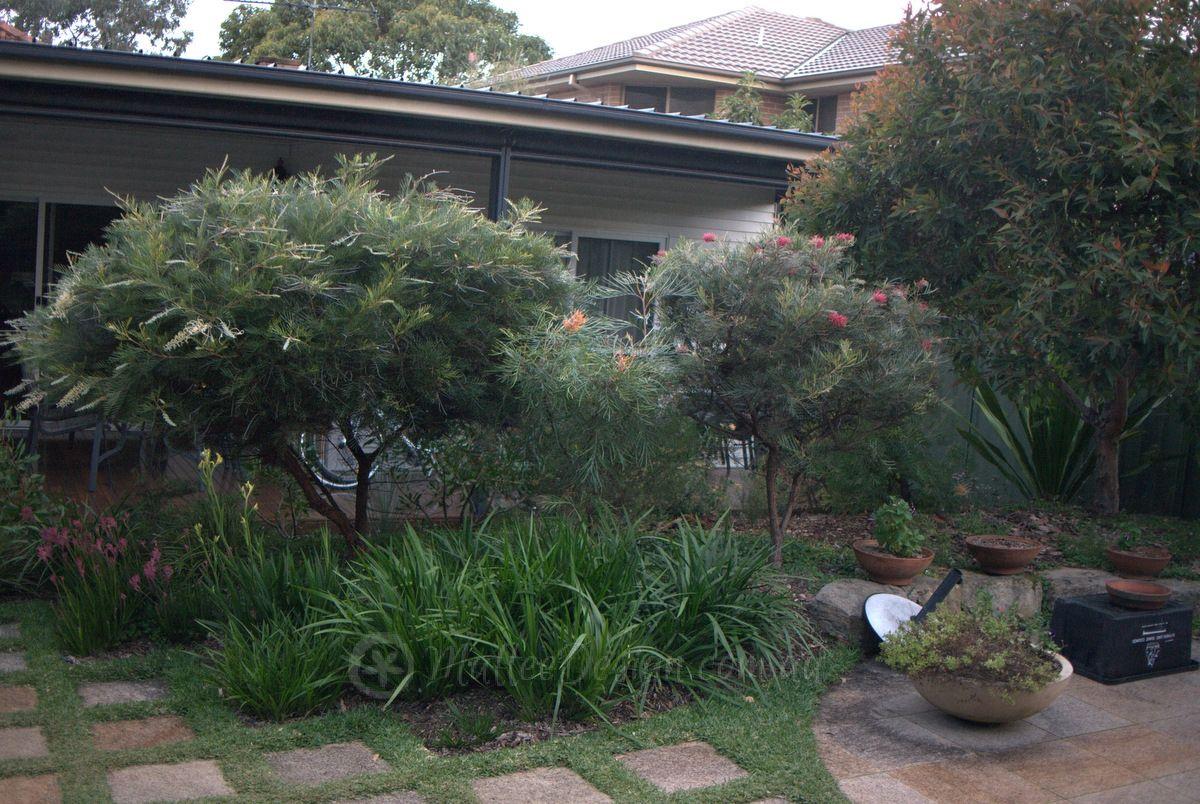 enticing suburban native garden
