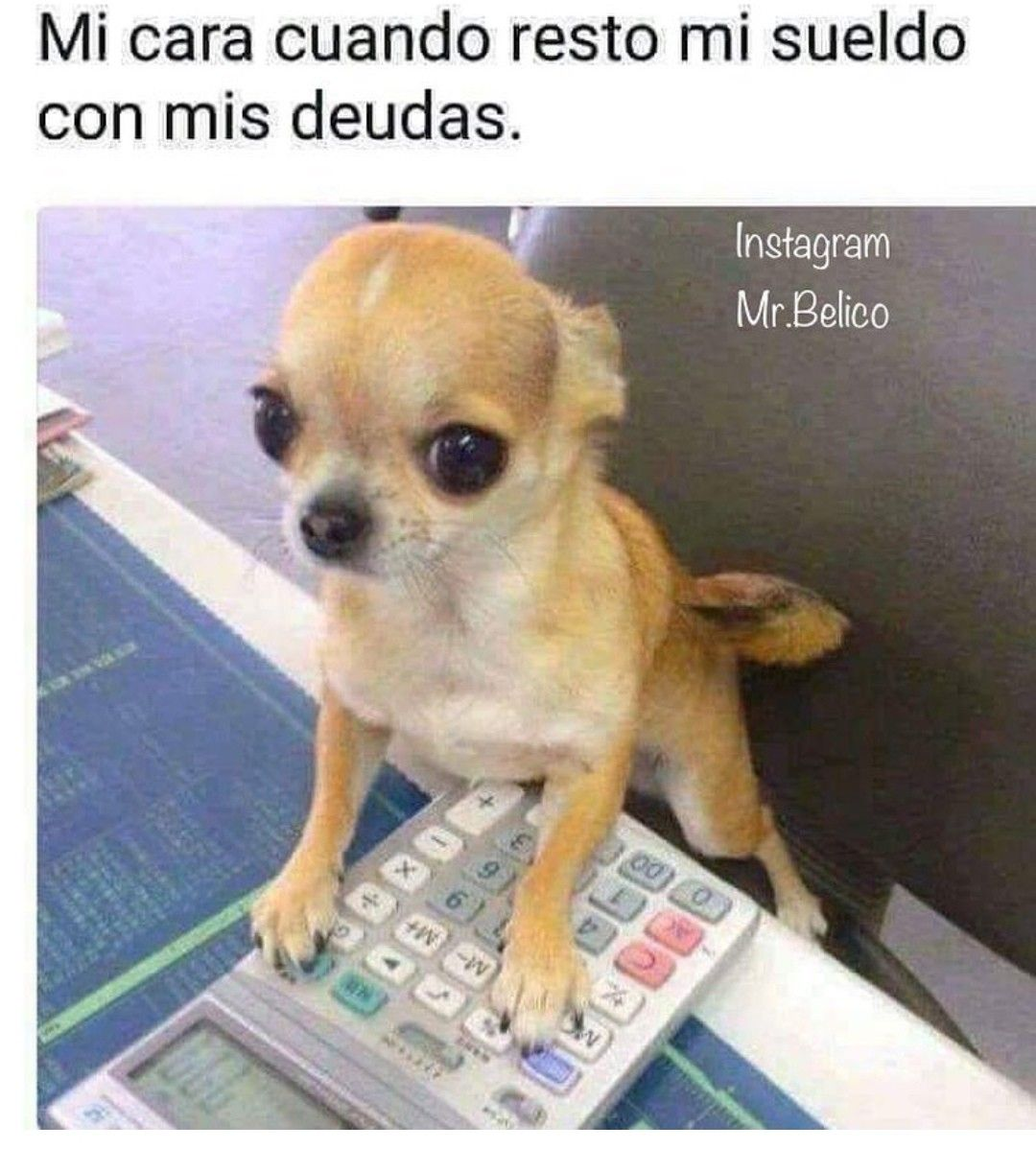Pin By Ange On Memes Cute Chihuahua Cute Puppy Pictures Chihuahua