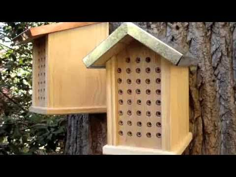 Pleasant Lots Of Nice Mason Bee Videos At This Site Garden Mason Download Free Architecture Designs Scobabritishbridgeorg