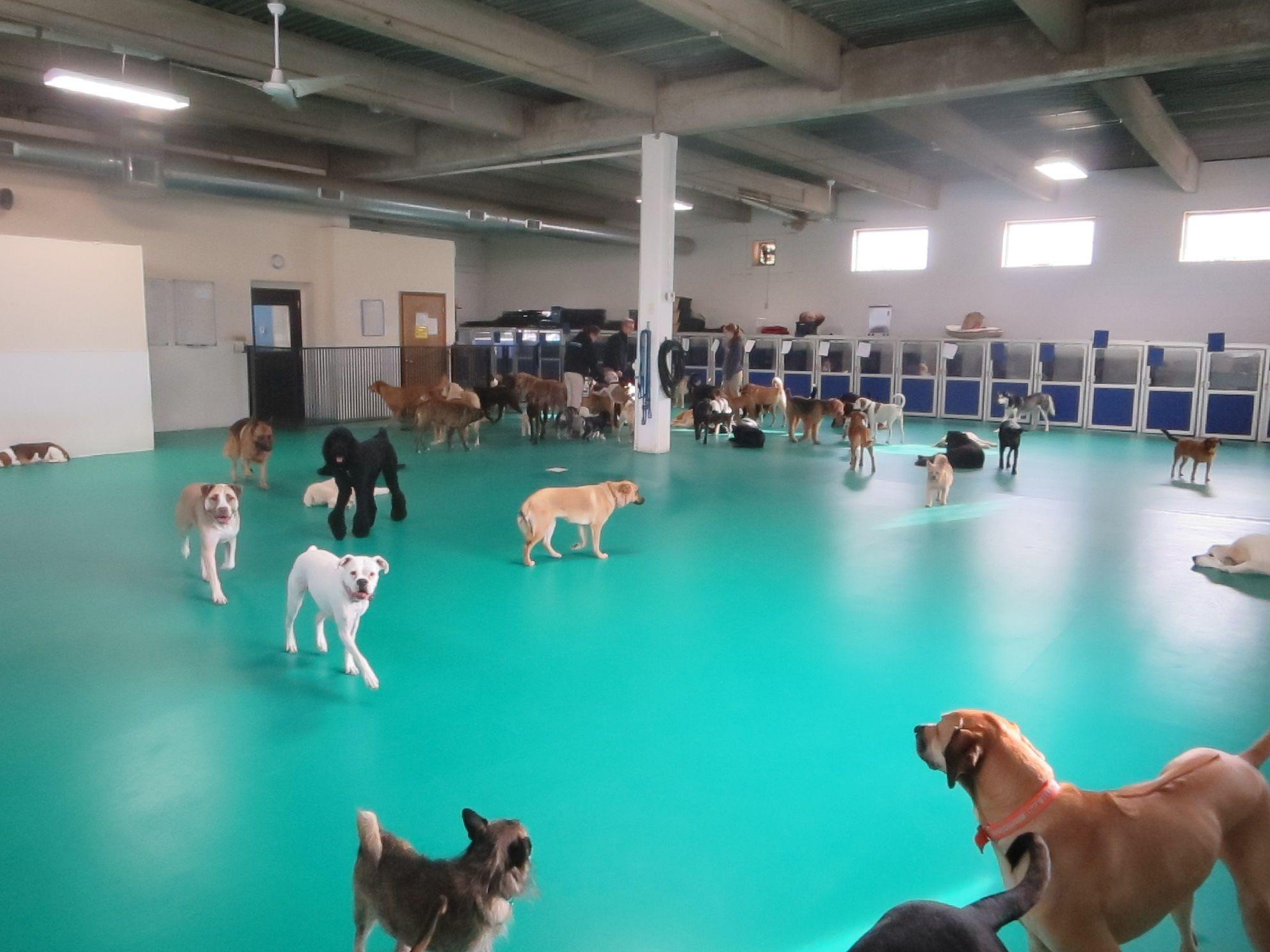 Image Result For Dog Daycare Floors