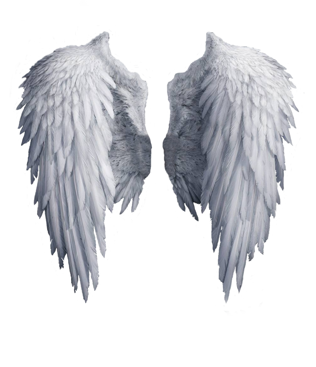 Lovely Wings favourites by Saphica8 on DeviantArt | Wings ...