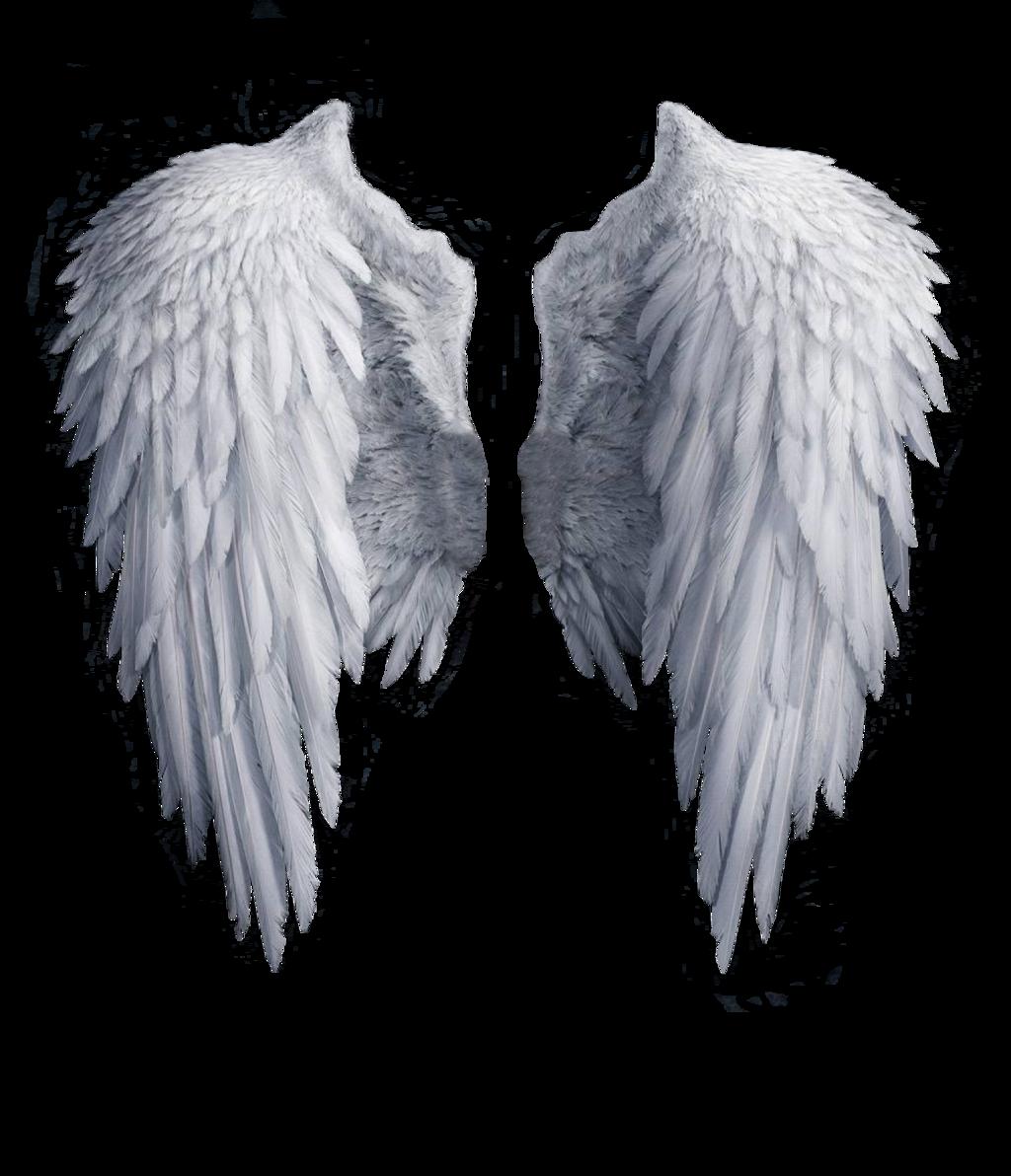 Angel Wings Stock Png By Shadow Of Nemo D7j2t68 Png 1 024 1 192 Pixels Gambar Sayap Tato Sayap Malaikat Sayap Malaikat