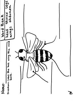 this is a hand-drawn diagram of a bee, created so that students may