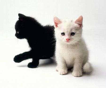 Adult Black Cats With Blue Eyes Moonkit Fluffy Black She Cat