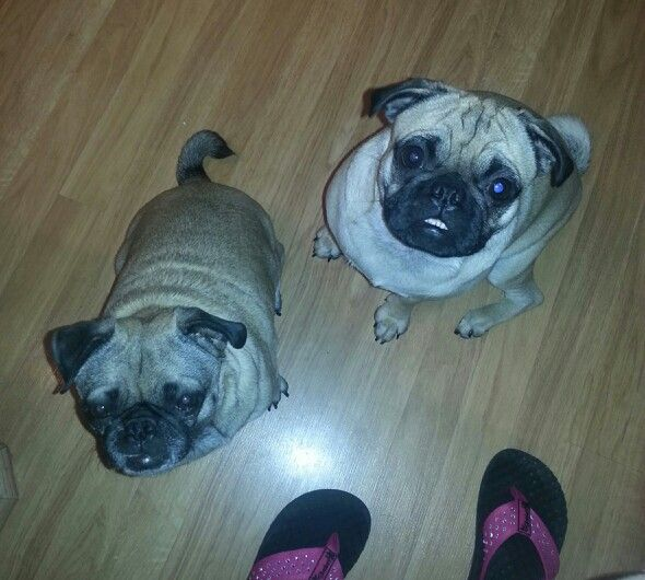 Baby Cloe and Phoebe begging for food. They're trying to help me with my diet :)