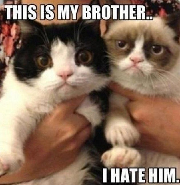Pokey, the grumpy cat's sister would play the piano but ...