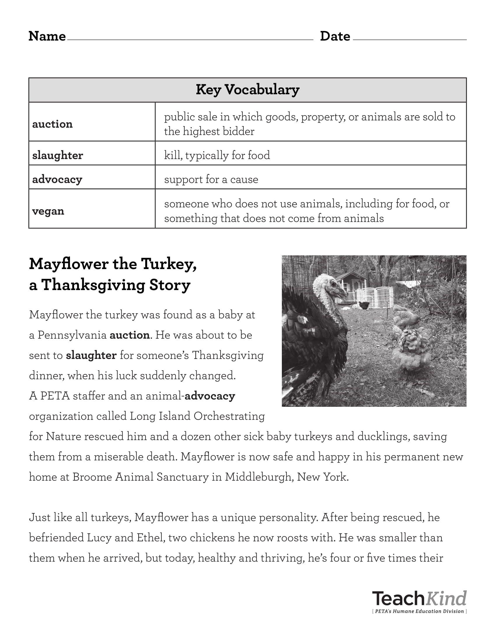 Teachkind Rescue Stories Mayflower The Turkey