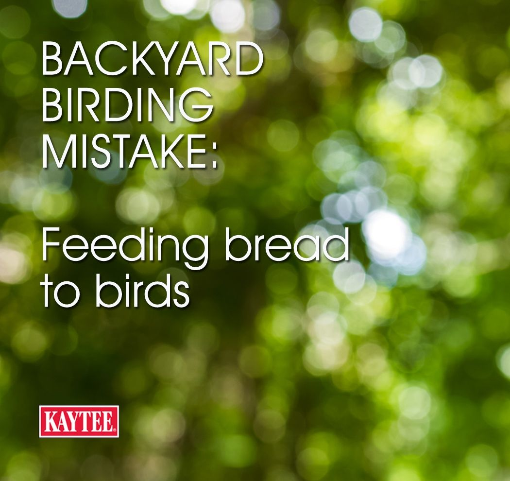 backyard birding mistake feeding bread to birds they need
