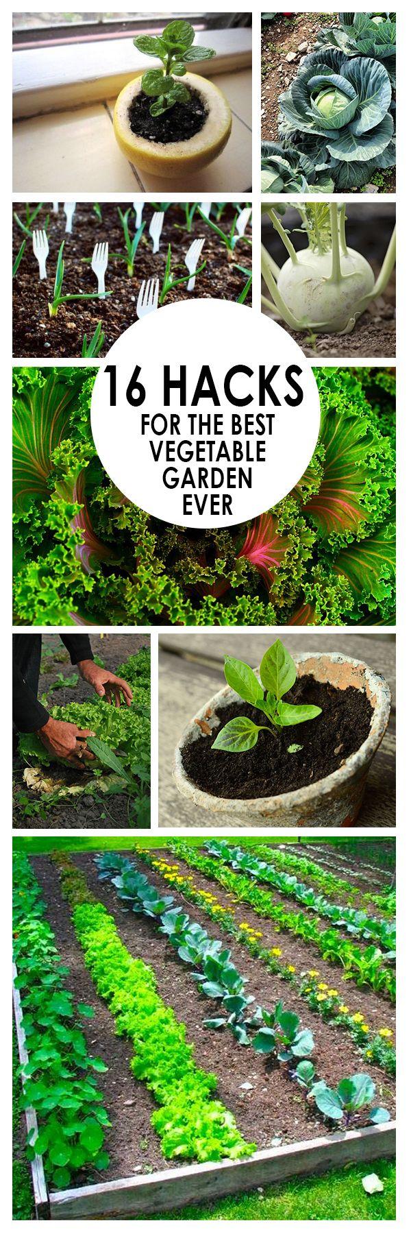 16 Hacks For The Best Vegetable Garden Ever Vegetable 640 x 480