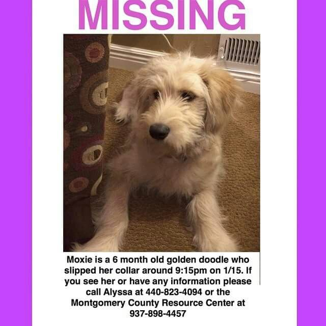 This Pretty Puppy Is Missing If Anyone Is Around The Dayton Ohio Area Please Keep An Eye Out For Her And Contact Alyssa We Really Need So Puppies Goldendoodle