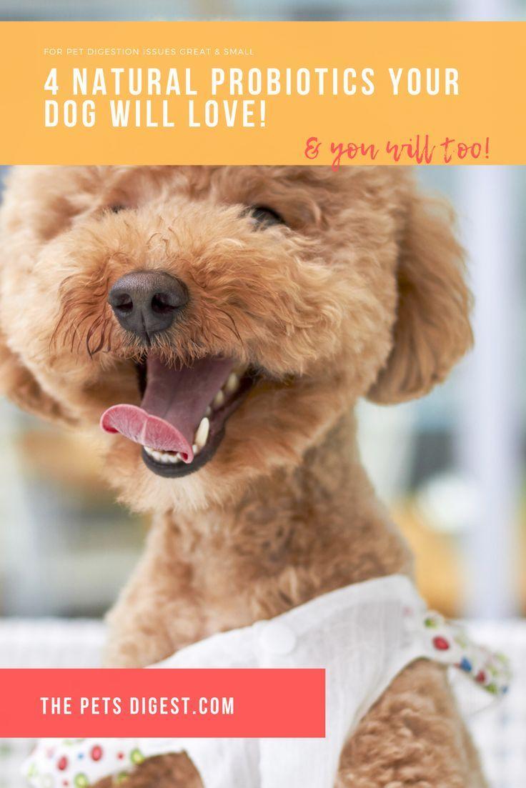 probiotic dog food diarrhea