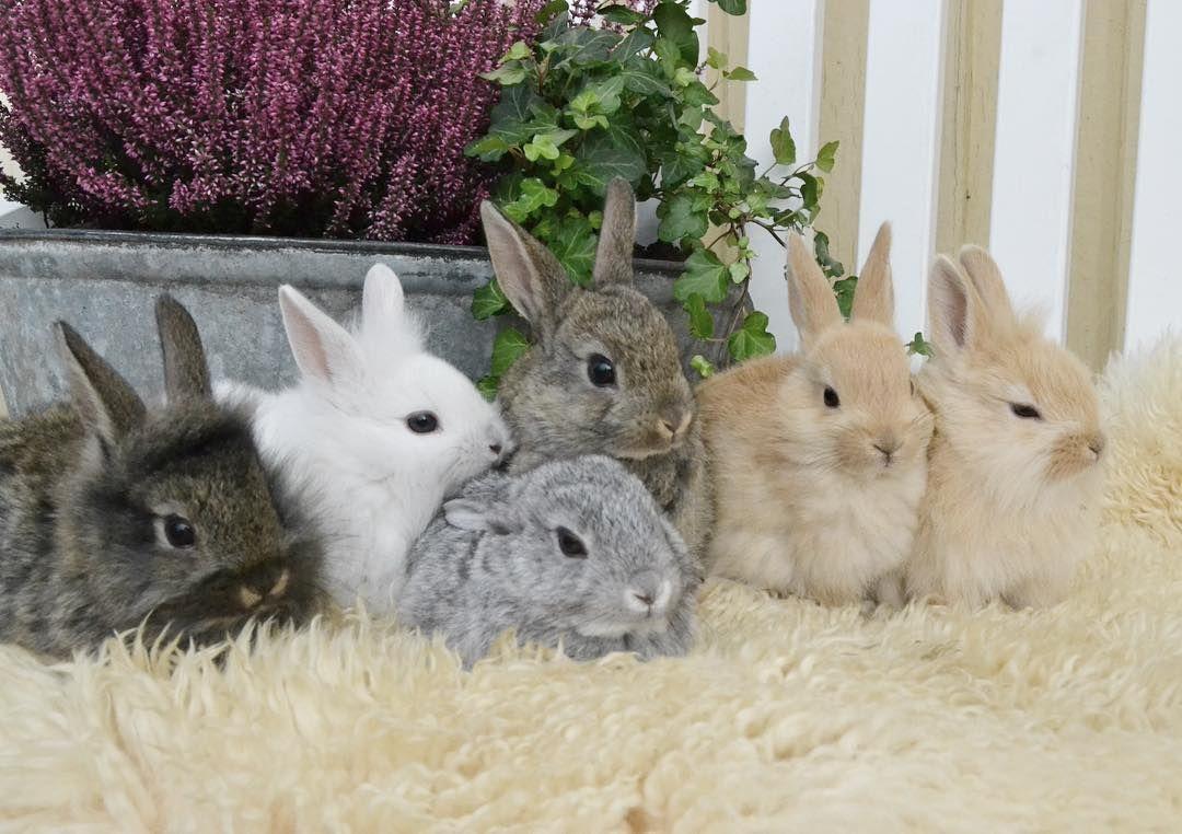 Pin Von Coschi Auf What Today Holds Kaninchen