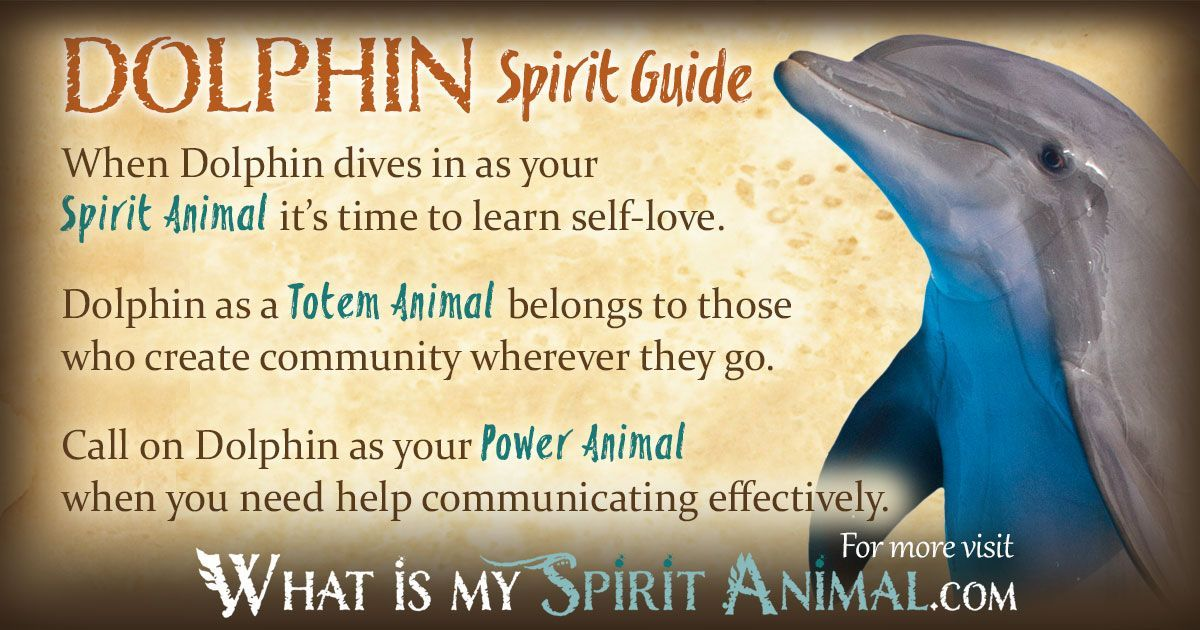 Dolphin Symbolism Meaning Power Animal And Totems