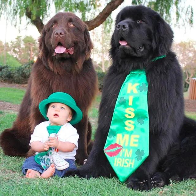 超大型犬による 子守り の様子をどうぞ ニューファンドランド 大型犬 犬