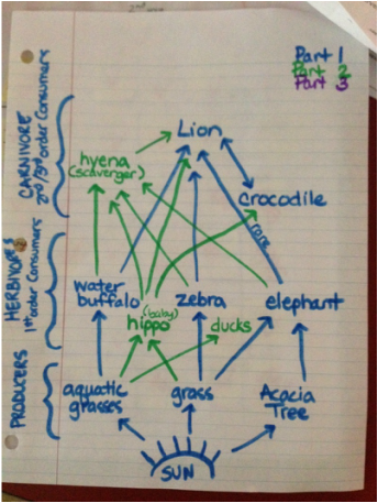 diagram food chains an African grassland ecosystem.