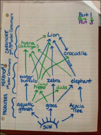 diagram food chains an African grassland ecosystem.