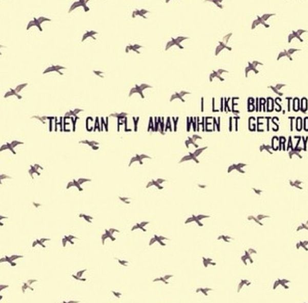 Pin By Emily Stein On Quotes I Like Birds American Horror Story American Horror Story 3