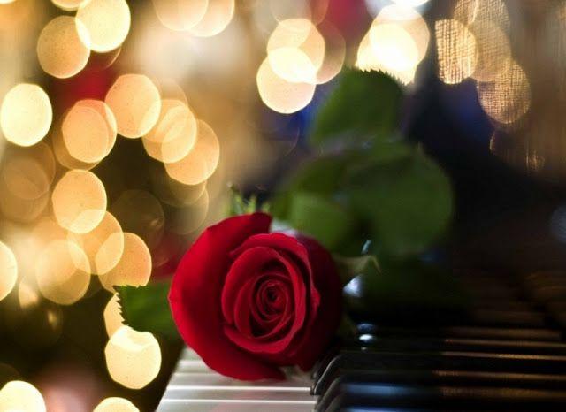 أجمل 40 خلفية عالية الدقة للورد الاحمر مداد الجليد Floral Poster Aesthetic Iphone Wallpaper Phone Wallpaper Images