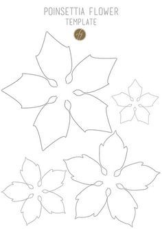 graphic relating to Printable Poinsettia Template known as Do-it-yourself Paper Poinsettia Cost-free Template Flor Paper bouquets