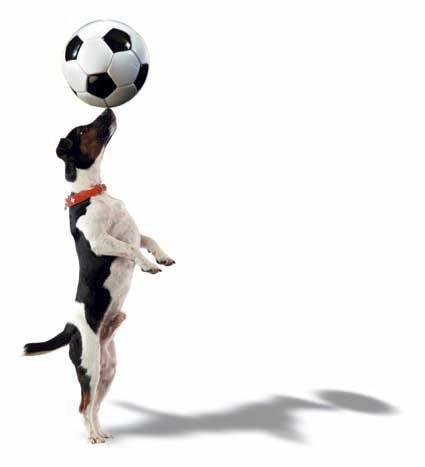 Dog+Playing+Soccer_4.jpg (425×467) I'm a seal!