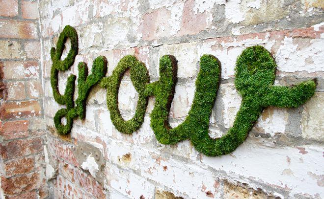 Haz un graffiti de musgo tú mismo | Chile