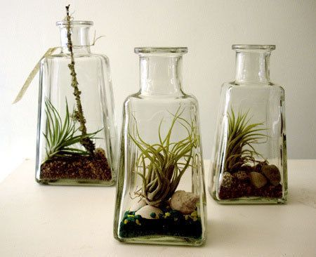 air plants.....very cool and protected from the plant eating lips of the cats......